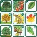 PEXETRIO - Znáš naše stromy ?