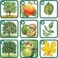 PEXETRIO - naše stromy (nová rozšířená řada)