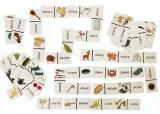 Domino ČTENÍ 2 - 80 kartiček